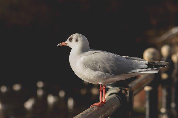 Animal Stock Photos: René Jordaan Photography - Gull on a Bridge
