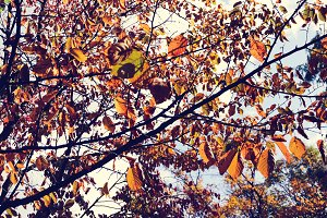 Autumn season at Maruyama Park