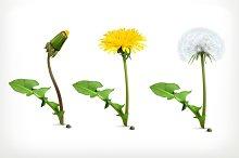 Dandelion flowers vector icons