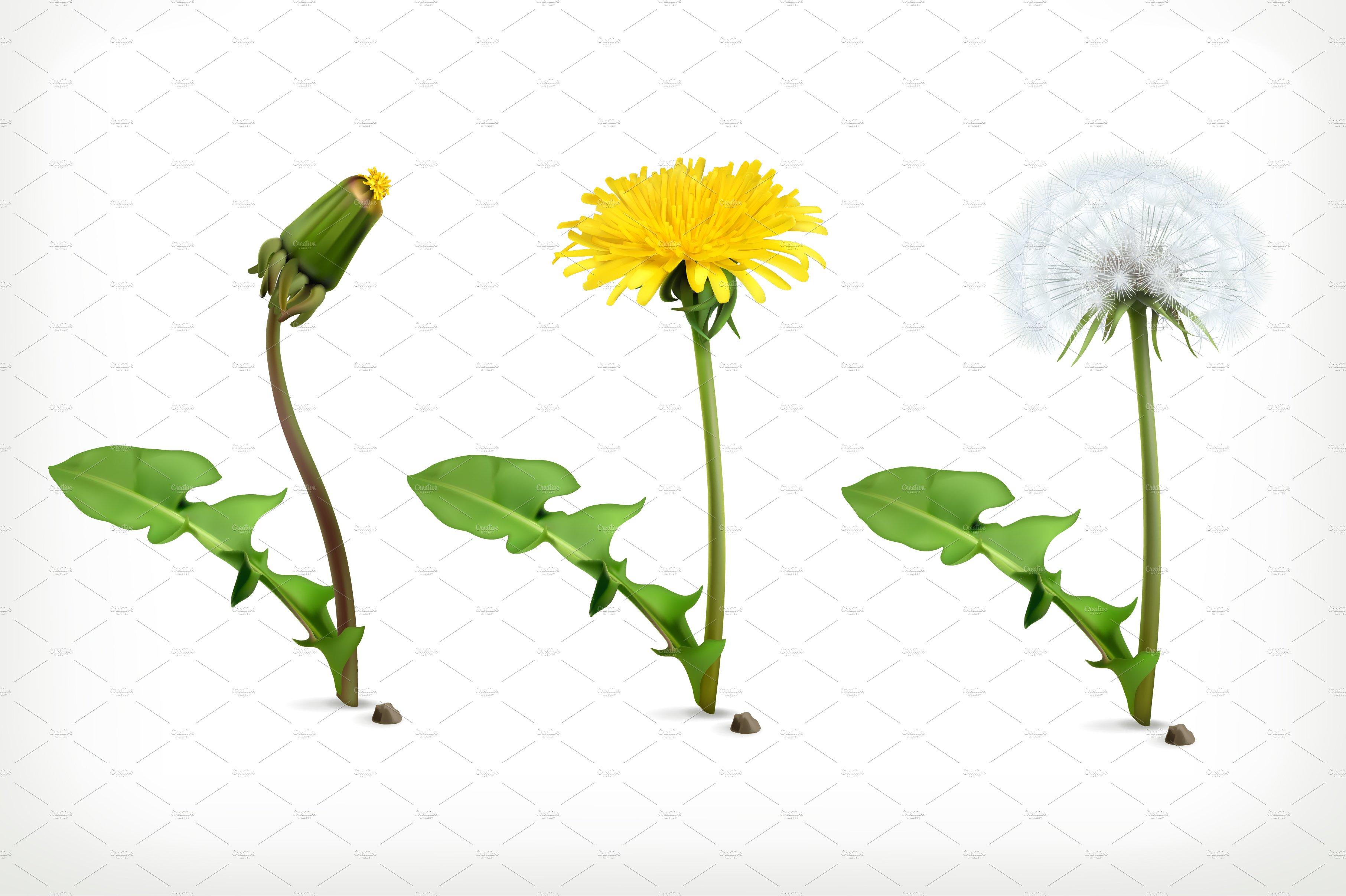 Dandelion flowers vector icons ~ Illustrations ~ Creative ...