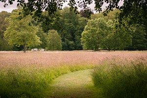 Grassy Path I