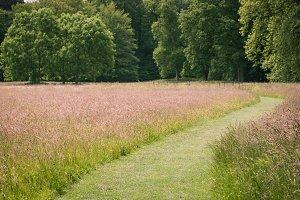 Grassy Path II