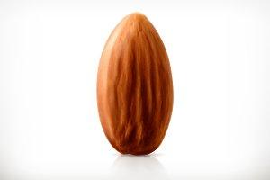 Almond vector icon