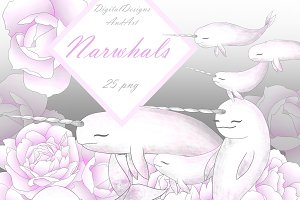Narwhals clipart