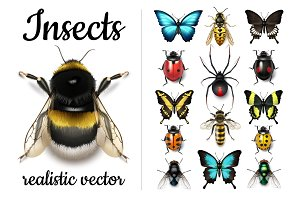 Vector Realistic Insect Bundle