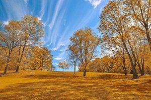 Gold Meadowlark Gardens