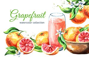 Grapefruit. Watercolor collection
