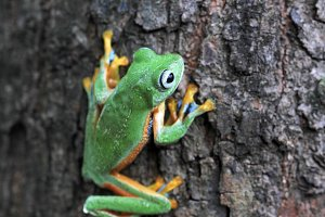 tree frogs walk