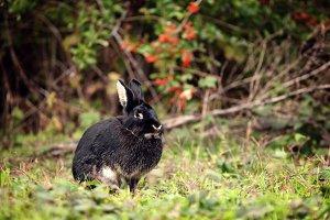 Nice black rabbit