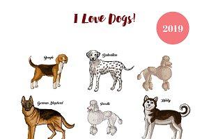Dogs calendar 2019. Dogs breeds