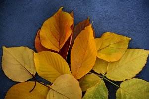 autumn background with fallen leaves