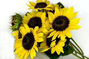 bright bouquet of sunflowers on whit