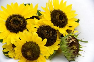 bright bouquet of sunflowers