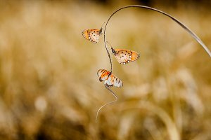 butterflies on tree branches