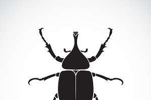 Vector of dynastinae. Insect. Animal