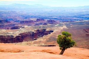 Small Tree Big World