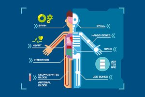 Human body anatomy infographic