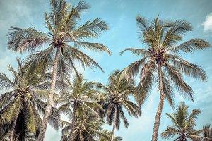 Coconut palms on a tropical beach