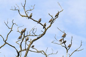 flock of birds sit on the dry branch