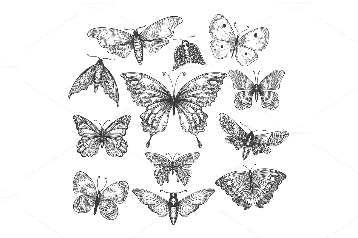 Save butterfly mariposa sketch