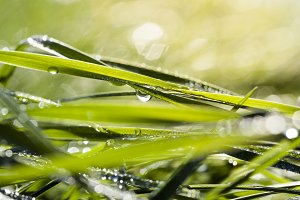 green grass with drops