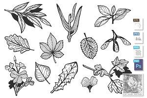 Different leaves set
