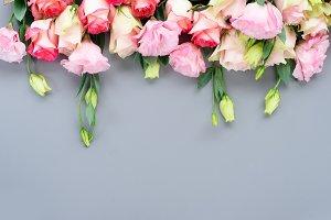fresh rose flowers on gray
