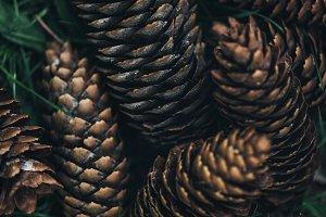 full frame image of pine cones backg
