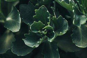 full frame image of succulents leave