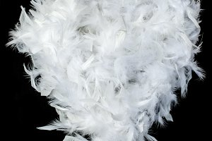 Feather white hart shape on black