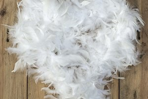 Feather white hart shape