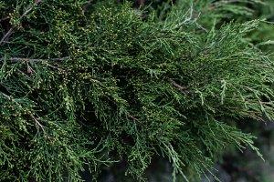 full frame image of cypress tree bra