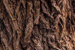 full frame image of old tree trunk b