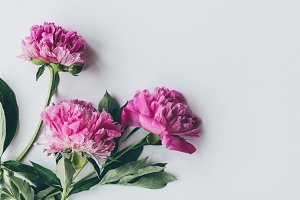 top view of pink peony bloom with le