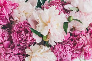top view of pink peony flowers textu