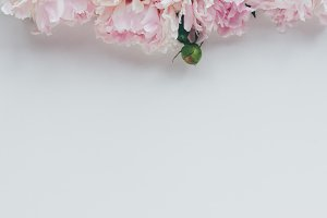 top view of light pink peony flowers