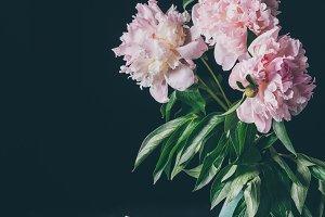 bouquet of light pink peonies in vas