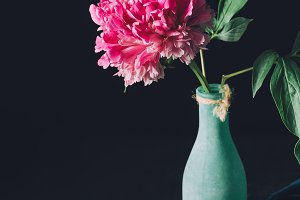 one pink peony flower in vase on dar