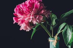 pink spring peony flower in vase on
