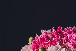 elegant pink peony bouquet, isolated