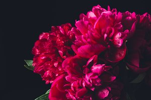 bouquet of beautiful pink peonies in