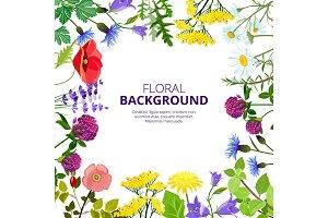 Cosmetics herbs. Health botanical