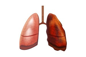 Human Lungs Internal Organ. Vector