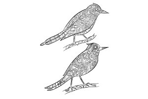 Birds coloring pages. Flying wild