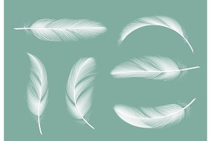 Feathers collection. Flying furry of