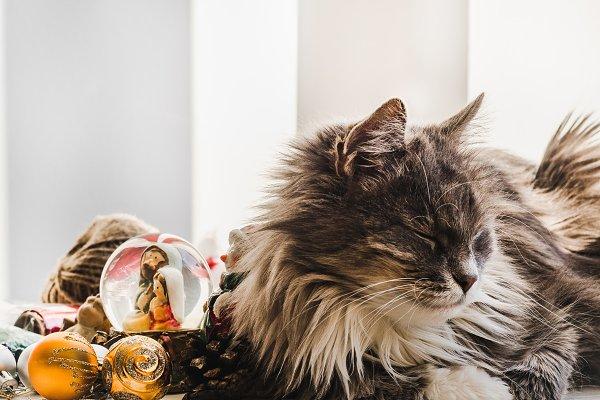 Stock Photos: Svetlana Barchan - Charming, fluffy kitten