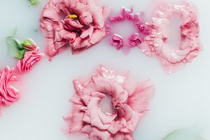 top view of arranged beautiful pink