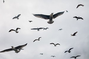 group of seagulls flying in sky