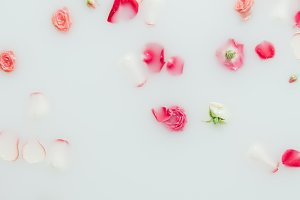 top view of beautiful arranged roses
