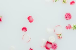top view of beautiful pink roses and